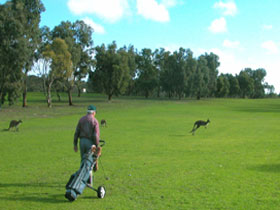 Coffin Bay Golf Club - Pubs Sydney